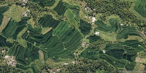 158 Bali Terraced rice fields x01