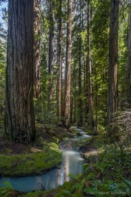 Montgomery Woods 201103310030