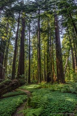 Humboldt Redwoods 201607120944