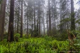 Redwood National Park 201006230060